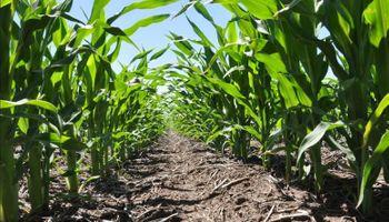 ¿Cuál es la mejor densidad de maíz para mi lote?