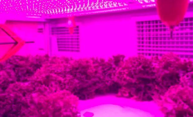 La técnica impulsó la producción de vegetales en 20 a 30%.