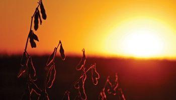 Balance positivo para la soja a lo largo de la semana