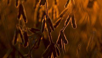 Clima, economía y agronomía: las claves para la nueva campaña de soja