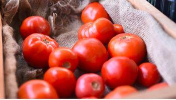 Recuperar el sabor del tomate: entre el mercado y el consumidor