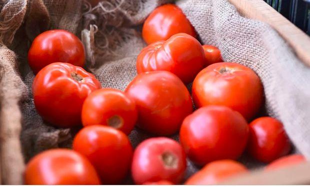 Los tomates que más rinden al productor y a la cadena de comercialización son los menos sabrosos.