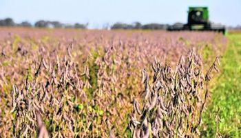 Radiografia de impuestos provinciales: Buenos Aires lidera la presión sobre la renta agrícola