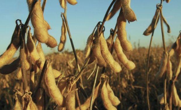 Lluvias en EE.UU. impulsan precios de la soja.