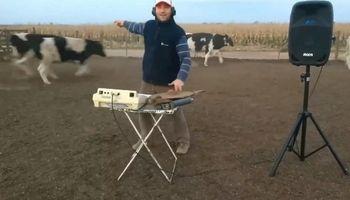 Todo para aquí, todo para allá: las vacas que se mueven con Los Palmeras