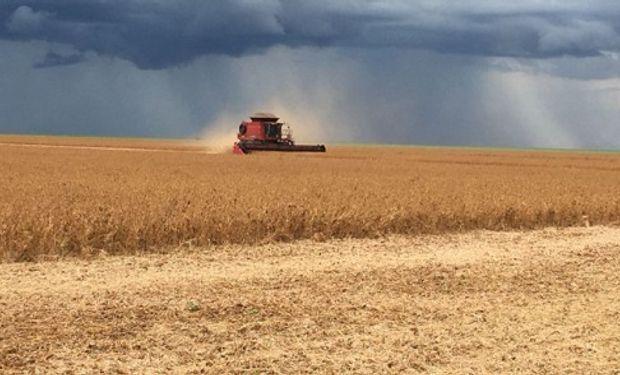 De igual manera, los precios del maíz y la soja volvieron a cerra con bajas en el mercado de Chicago.