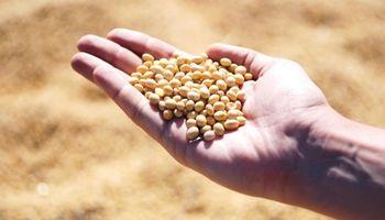 Criterios para elegir cultivares de soja: CREA compartió ensayos del norte de Córdoba
