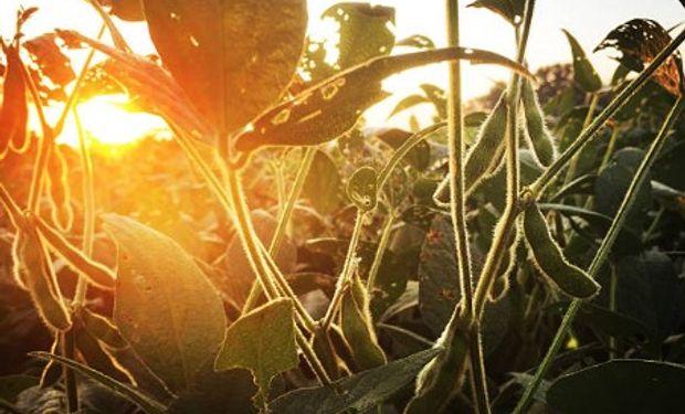 El producto más afectado fue la soja que llegó a mostrar pérdidas cercanas a los 6 dólares para finalizar con bajas superiores a los 3 dólares.