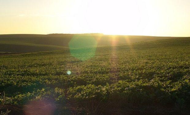 El área de siembra maicera, que prometía ser la más importante de todos los tiempos, ahora se tambalea en la cuerda floja.