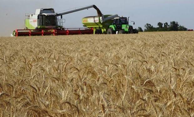 En la región núcleo solo 160 mil toneladas más se producirían a pesar de haberse sembrado más y fertilizarse mejor.