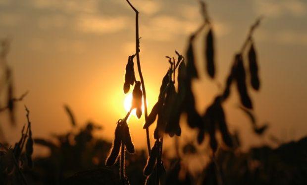 La Bolsa de Cereales de Córdoba destaca una tendencia estable para los principales commodities agrícolas.