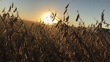Clima más seco y pobres exportaciones: los factores que presionan a la soja