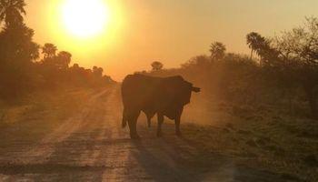 Los tres pilares que definirán a la ganadería del futuro