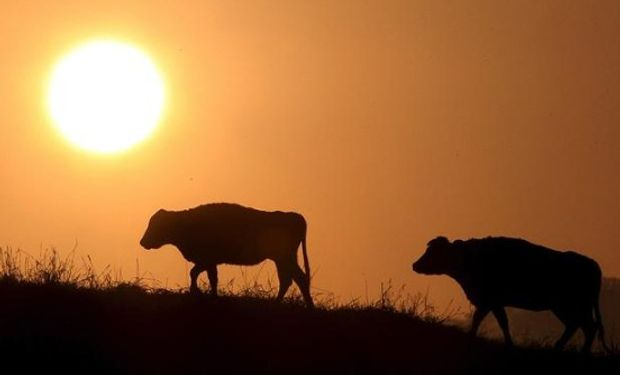 La próxima ganadería explicada por un especialista.