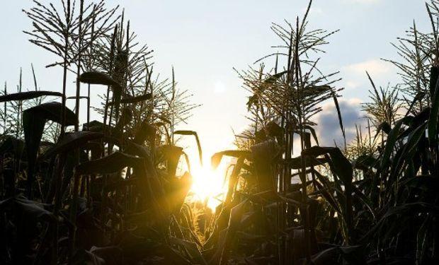 Impacto de la presión tributaria en la producción agrícola.