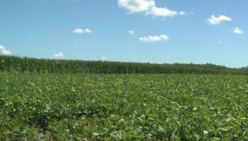 Derribando mitos: ¿Está la soja limitada por nitrógeno?
