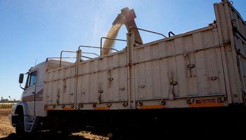 Desde el 5 de noviembre estará prohibido el uso y comercio de diclorvós