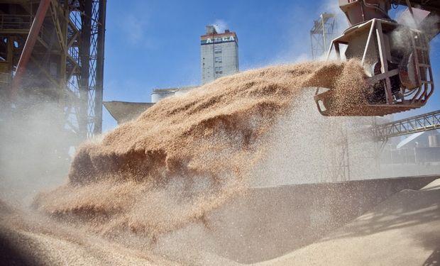 Las muestras serán tomadas únicamente a los productores que el Instituto determine, a diferencia de la reglamentación vigente para la especie soja.