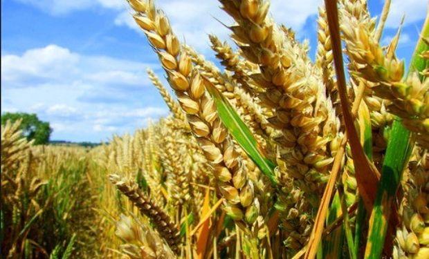 Hay que aprovechar los precios del trigo y evitar la baja de la soja