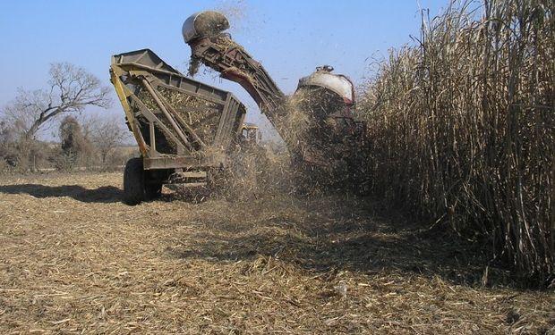 El proyecto apunta a incrementar el cultivo de la caña de azúcar.