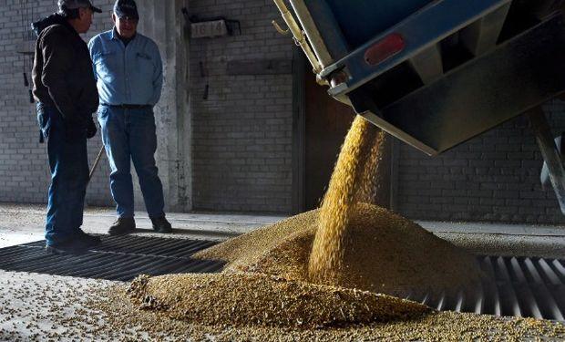 En Estados Unidos ya se cosechó al menos un 72% de la soja.