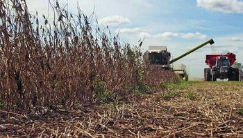 Los arrendamientos de soja en Córdoba cayeron un quintal contra el ciclo anterior