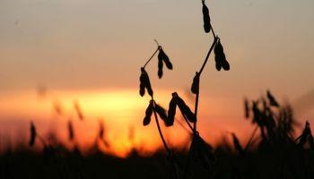 Crece el malestar en el campo frente al posible freno en la rebaja de retenciones