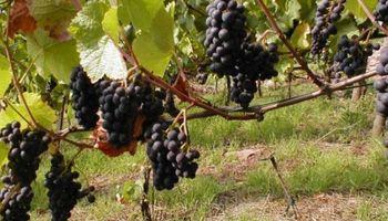 El Banco Nación firma acuerdos para impulsar al sector vitivinícola