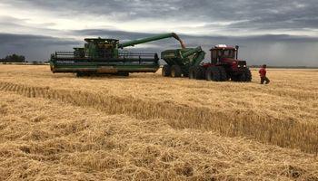 """El trigo suma un nuevo impacto del clima: """"Las lluvias llegaron en el peor momento"""""""
