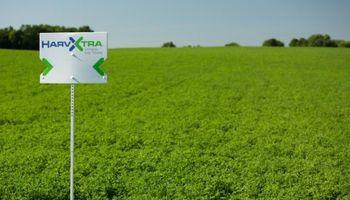 HarvXtra: la alfalfa con Tecnología Roundup Ready que saldrá al mercado en 2019