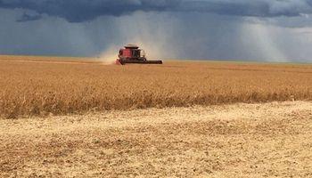 Retrasos en la cosecha norteamericana brindan impulso a la soja en EE.UU.
