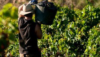 Trabajador rural y examen preocupacional: las obligaciones del empleador