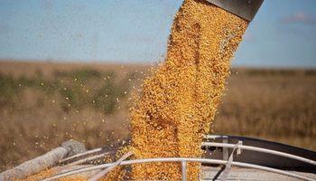 La sequía también juega en Brasil y golpea a la safrinha de maíz
