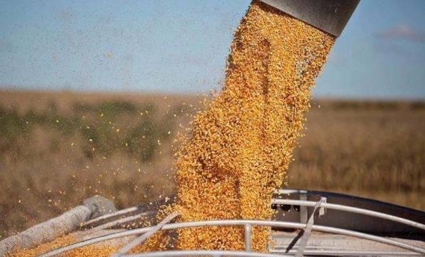 En maíz, la sequía de Brasil mejora las posibilidades de colocación de nuestra cosecha.