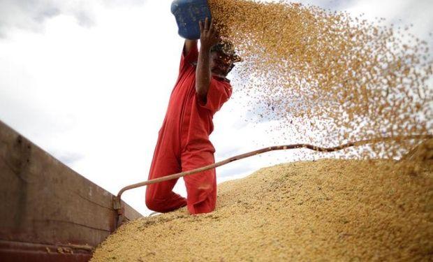 Brasil: el analista jefe de Agroconsult dijo que la siembra de la oleaginosa alcanzó un 73 por ciento del área a mediados de noviembre.