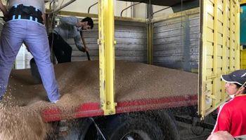 La reactivación del puerto de Santa Fe: otra muestra de la revancha del trigo