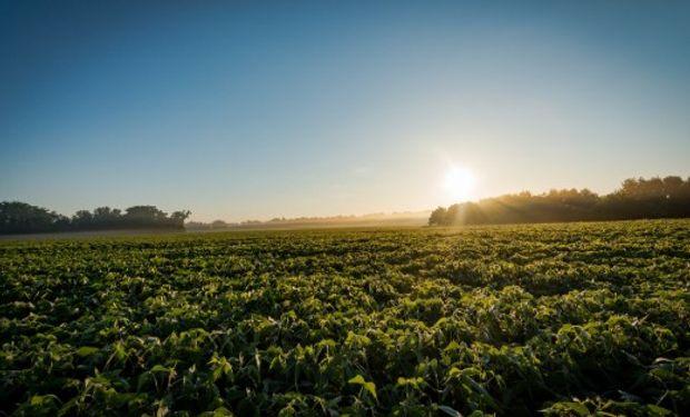 La reunión entre los mandatarios tendrá lugar el día sábado, y los resultados de dicho encuentro tendrán fuerte repercusión en el mercado de granos.