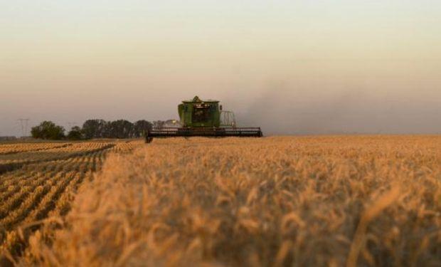 Por menores precipitaciones y retenciones, los márgenes de trigo caerían en Córdoba: informe de la Bolsa de Cereales provincial.