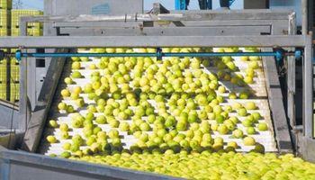 La citrícola San Miguel recibió financiamiento internacional por US$ 100 millones