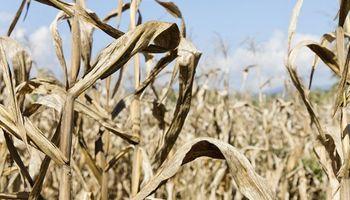 Emergencia agropecuaria: novedades en los beneficios para productores