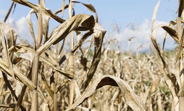 Días atrás la provincia de Santa Fe accedió a la emergencia agropecuaria por la sequía registrada durante el verano pasado.