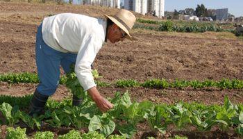 Agricultura urbana: una alternativa agroecológica para reutilizar el suelo