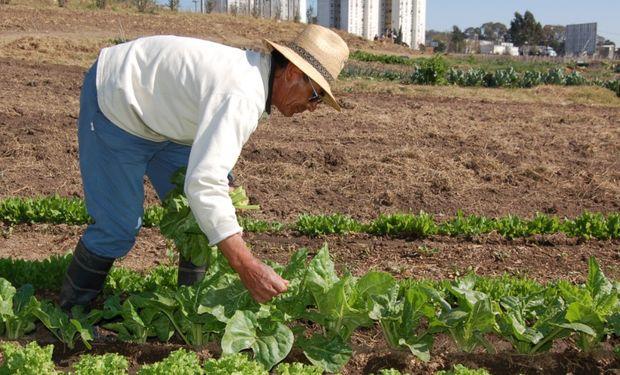 Más de 30 hectáreas ubicadas en la ciudad de Rosario son explotadas de manera agroecológica.