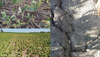 La seca en imágenes: crece la preocupación en el campo