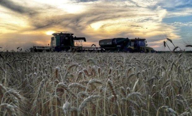 Los eventos climáticos impactan sobre el potencial de rendimiento del trigo y recortan la proyección de producción.