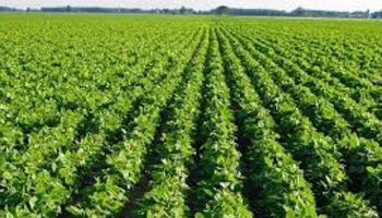 """""""4 por 1000"""": una iniciativa que apunta a la captura de carbono en los suelos productivos"""