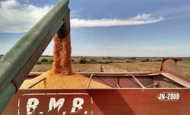 Remate del primer lote de maíz: condiciones.