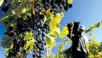 Remuneración del trabajador agrario: detalles de la normativa vigente