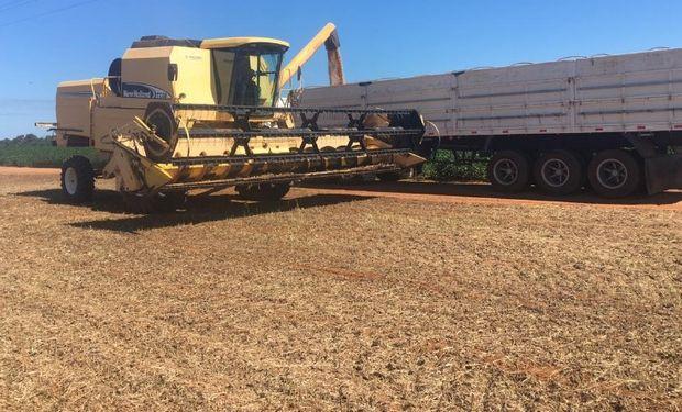 Productores de soja en Brasil enfrentan pérdidas por sequía.
