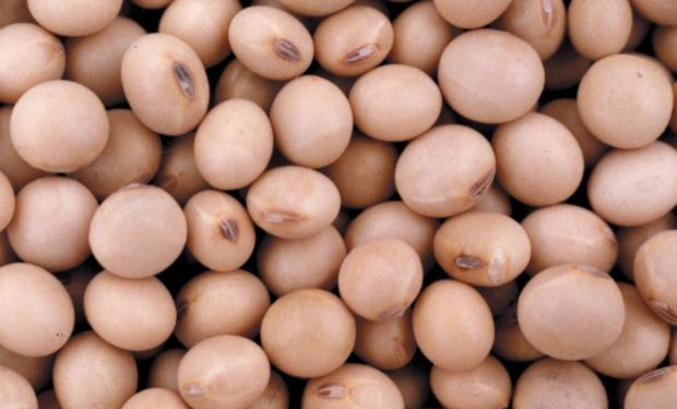 Servirá para productores, empresas semilleras y la cadena comercial de la soja.